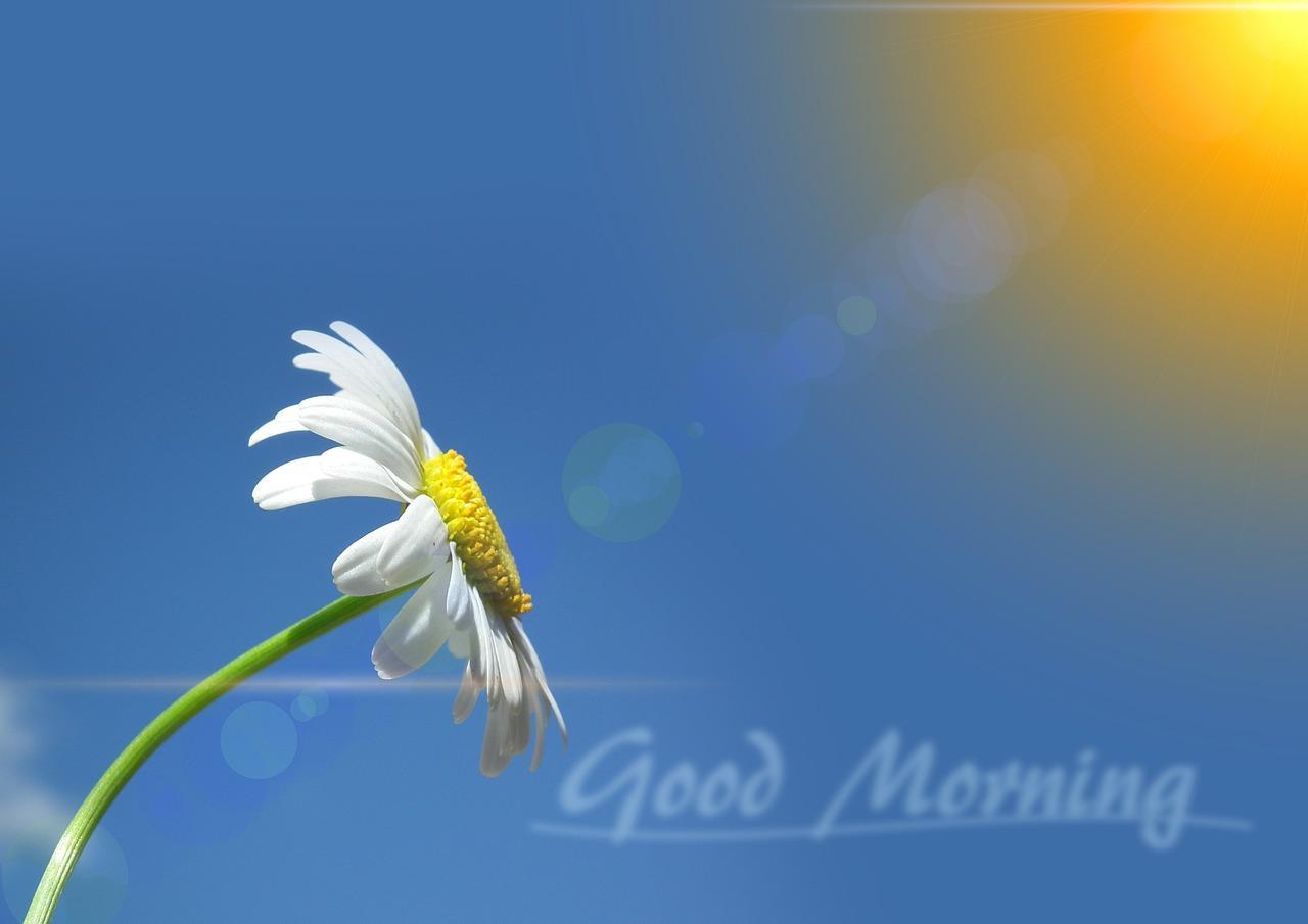 Bom dia amor te amo