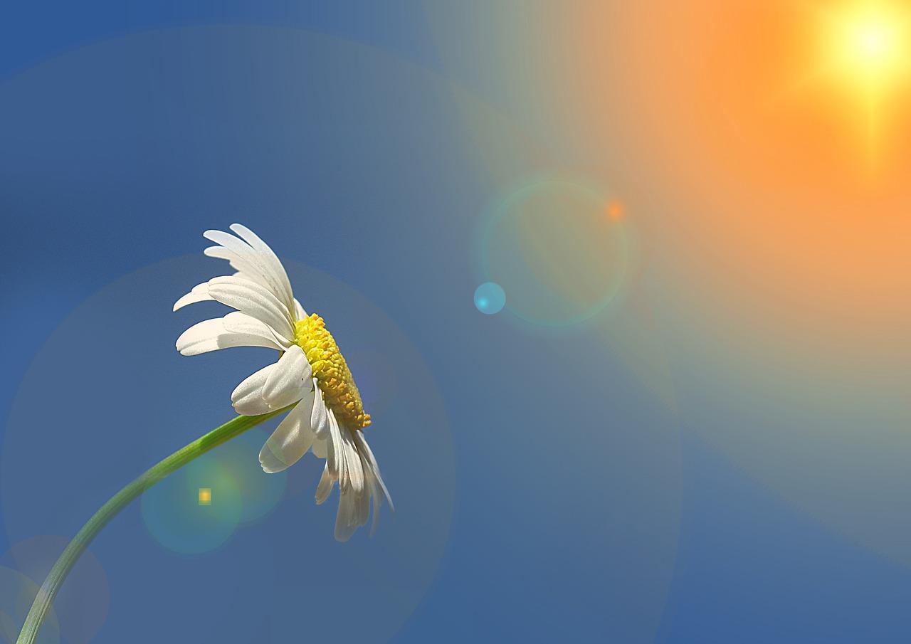 Frases De Bom Dia Para Alguém Especial: Frase De Bom Dia Para Alguém Especial -【FRASES PARA STATUS】