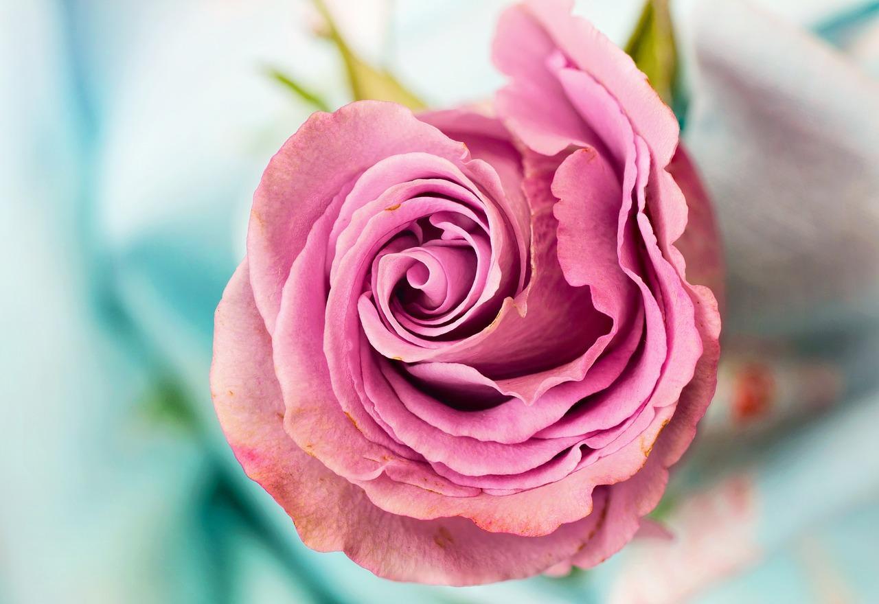 Mensagem de bom dia para o amor